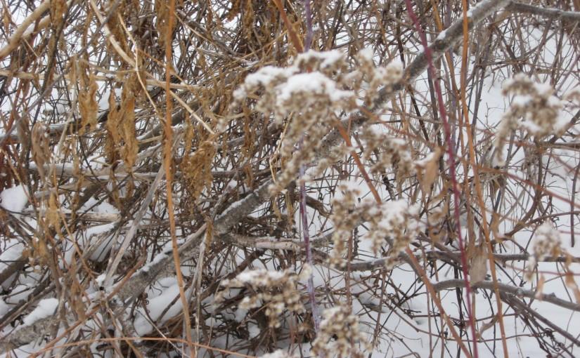 Flurries of Flashbacks and WinterFun